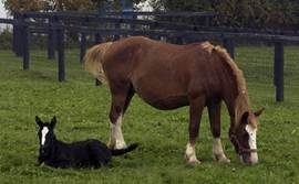 Council members will work to discourage overbreeding and to promote responsible horse ownership.<br /> <p class=