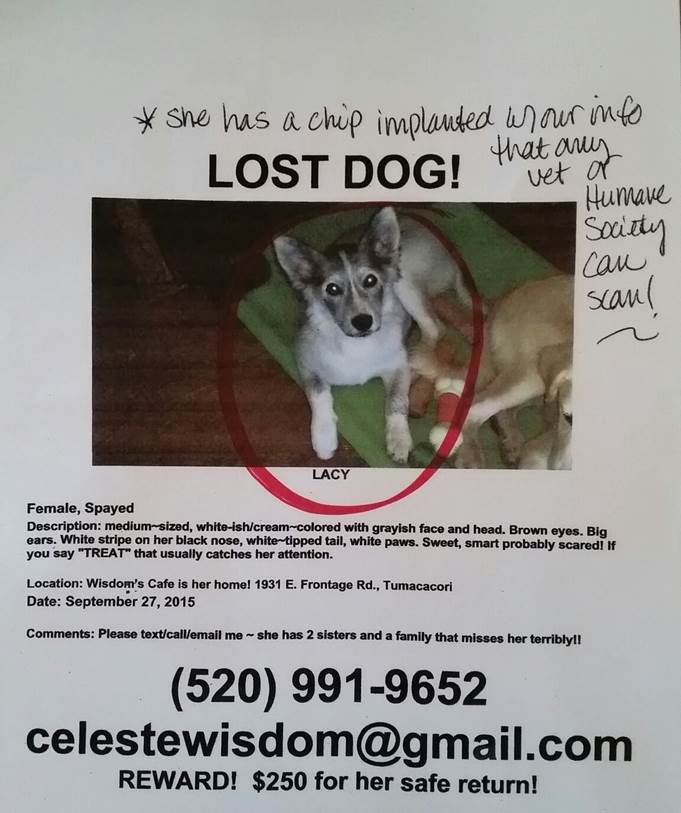 Lucy Lost - Please Help!